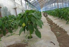 Fermierii mai au la dispoziție două săptămâni pentru a depune cererile de solicitare a ajutorului specific acordat pentru îmbunătățirea calității produselor ecologice în sectorul agricultură ecologică.