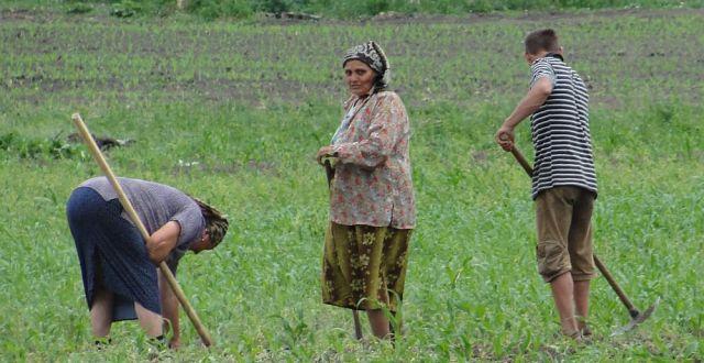productie agricola