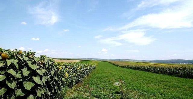 Vânzarea terenurilor agricole către străini