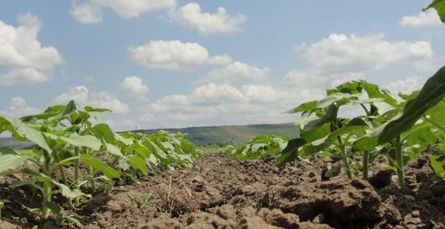 agricultura-inteligenta