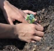 fonduri pentru agricultura ecologica