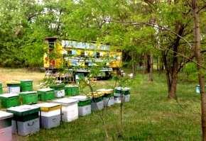 miere-albine-naturala