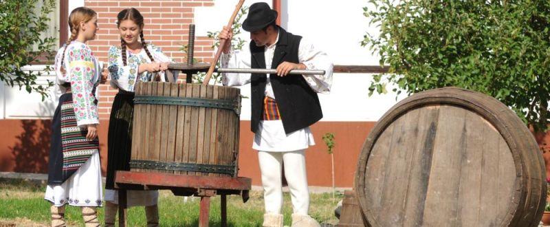Festivalul Bachus 2014