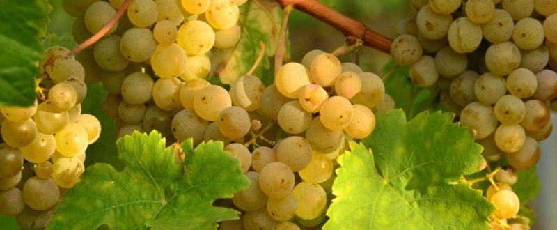 Programul National de Sprijin al Romaniei in sectorul vitivinicol 2014-2018