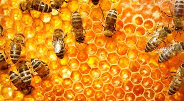 albine de vanzare