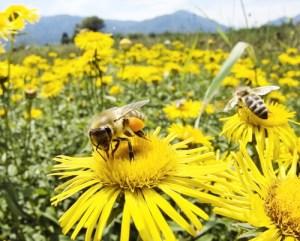 familii-albine-roiuri-albine