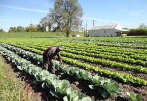 asigurari agricole vegetal