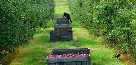 fonduri europene nerambursabile pomicultura