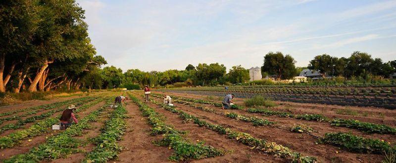 zilieri agricultura