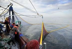 peste, pescari