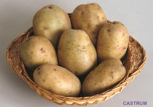 cartof CASTRUM