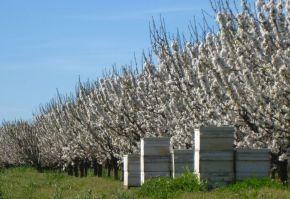 fonduri europene pentru pomicultura pndr