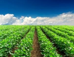 Cerere-teren-agricol