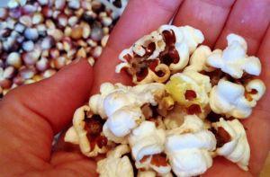 Porumb popcorn