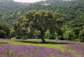 Andalusia arbori, copaci, padure