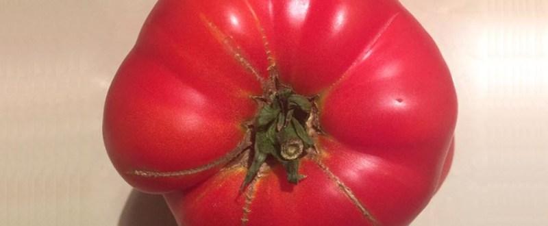 tomata inima de bou