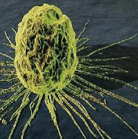 Il 17 Gennaio è entrata in vigore la nuova direttiva cancerogeni