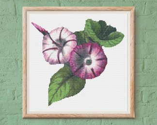 morning glory flower free cross stitch pattern