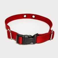Dog Collars Product Related Keywords