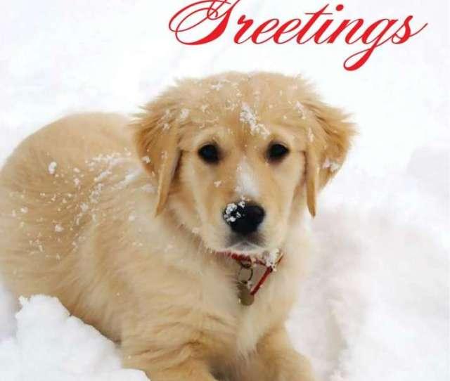 Charity Christmas Cards Animal Christmas Cards
