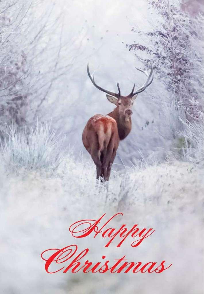Animal Charity Christmas Cards St Martin Apostolate