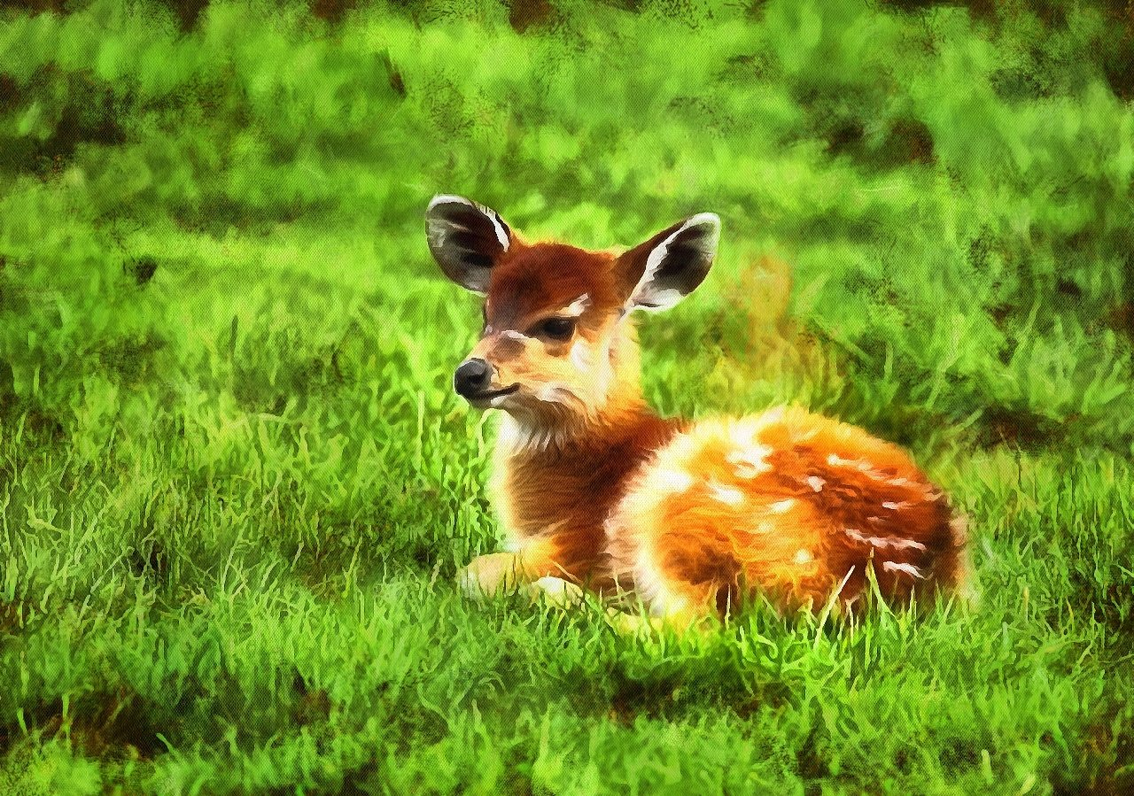 Baby Animal Photos Free Stock Baby Animal Photos