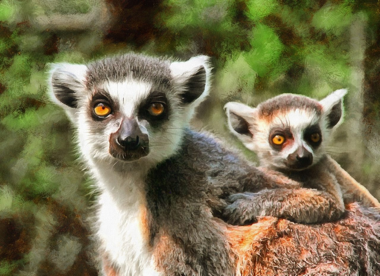 Cute Baby Animals Images Of Cute Baby Animals Public Domain