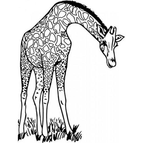 Giraffe Cardboard Coloring Cutout