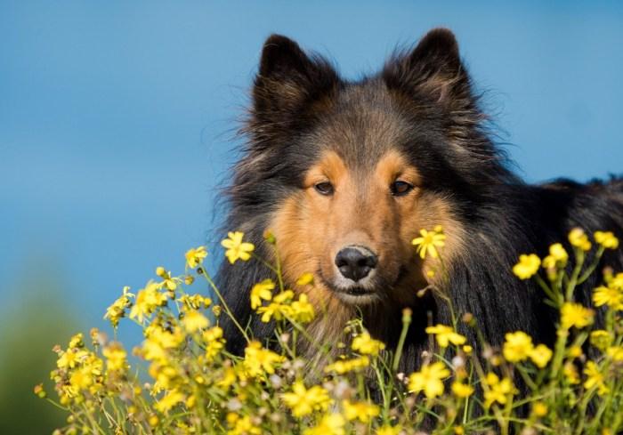 dog-1023013_1280