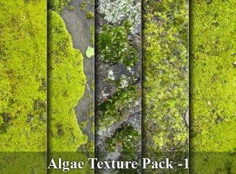 green-algae-texture-images-01