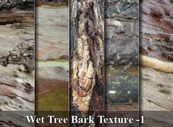 wet-tree-bark-texture-images-pack-01