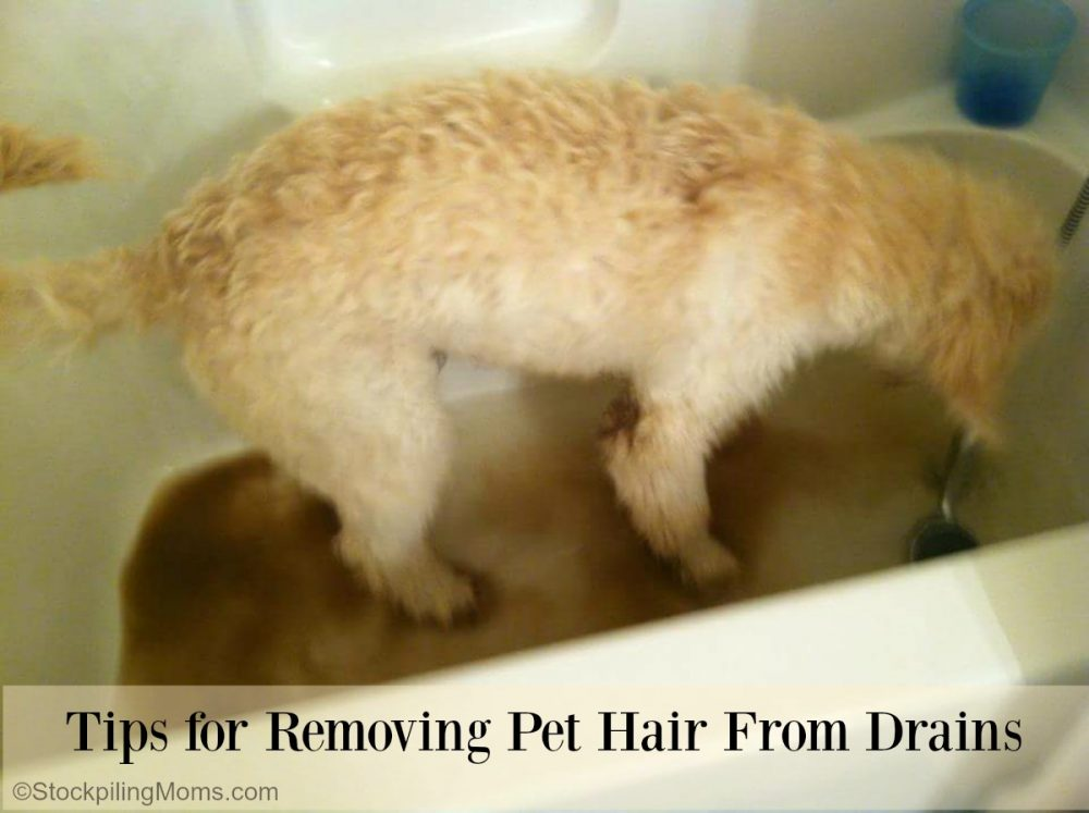 Tips for Removing Pet Hair From Drains