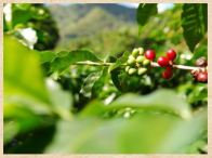 Selva Negra Coffee Farm