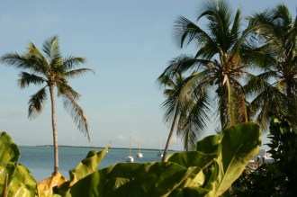 Palm Trees and Boast on Water