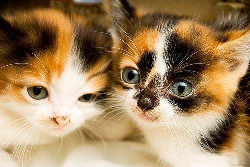 Cute Sleeping Kitten Wallpaper 30 Adorable Photographs Of Cats Stockvault Net Blog