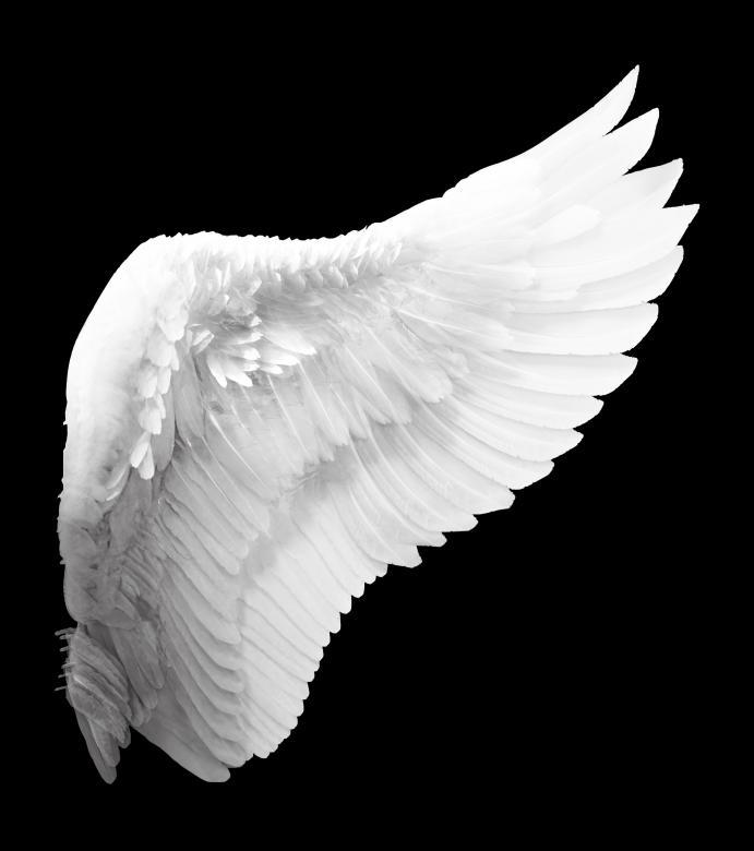 Afbeeldingsresultaat voor stock free images wings