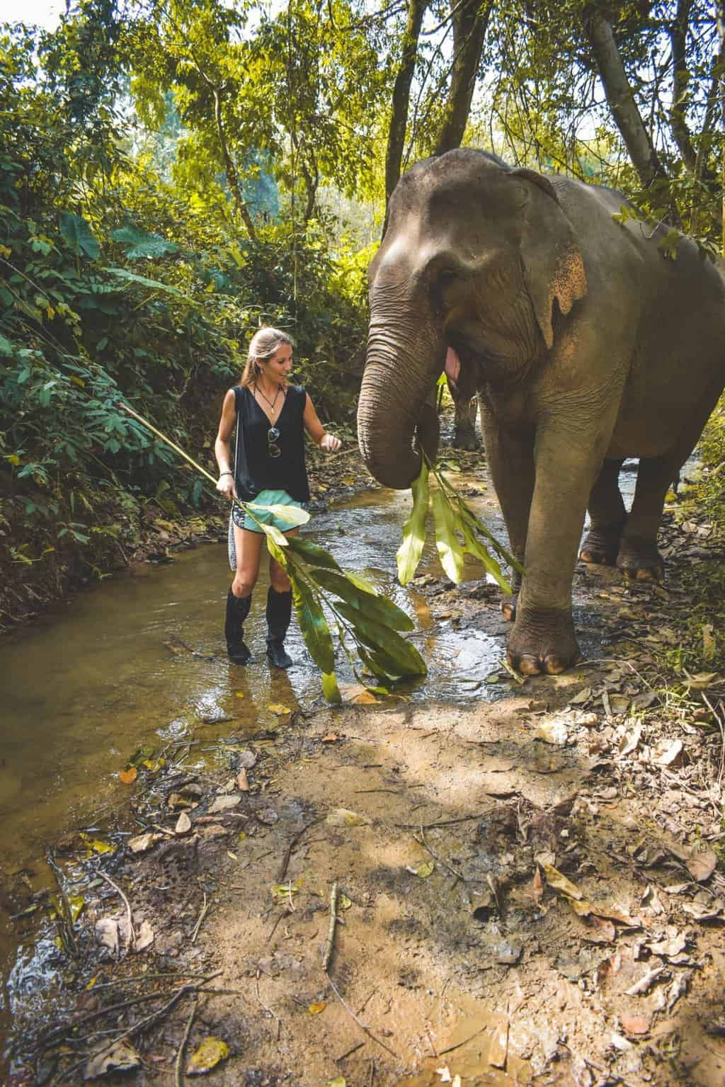 Ethical elephant experience in Luang Prabang