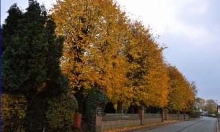 DSC_0082Cem1 autumn