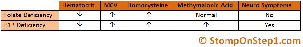 folate & b12 deficiency, megaloblastic anemia | stomp on step1, Skeleton