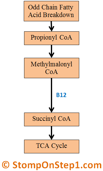 Methylmalonic Acid Methylmalonyl Coa B12 Deficiency