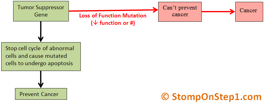 Oncogenes & Tumor Suppressor Genes | Stomp On Step1