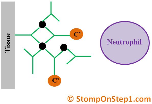 Type 1, 2, 3 & 4 Hypersensitivity | Stomp On Step1