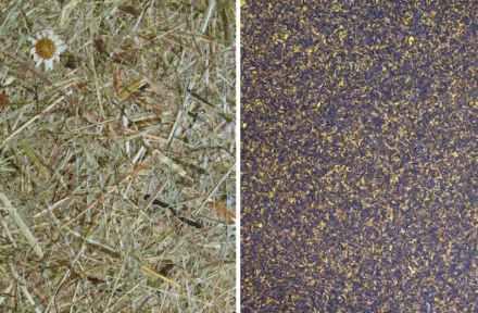 """<a href=""""http://www.organoids.com/""""target=""""_blank"""">Organoid Technologies</a>: Grasschnitt vom Berg Wildspitze (links), Blüten der Kornblume (rechts). Der typische Pflanzenduft soll mehrere Jahre halten, verspricht die Firma. Foto: Organoid Technologies"""