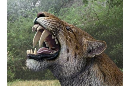 """Artistic reconstruction of a """"saber-toothed cat"""" by painter Mauricio Antón. Source: Senckenberg"""