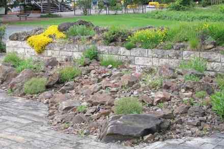 Ein Steingarten - ein natürlicher, wenn auch sehr trockener Lebensraum.