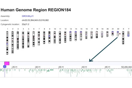 Chromosome 22. Source: Genome Reference Consortium