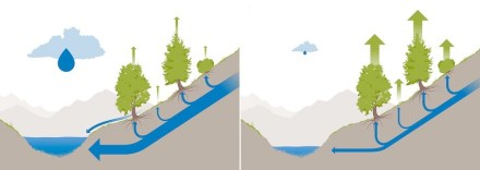 In an average summer (left), less water evaporates through vegetation; in a hot summer accompanied by dry conditions, the opposite is true, which amplifies the lack of water in streams. Graphic: Michael Stünzi / ETH Zürich