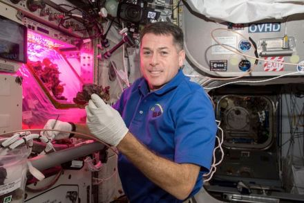 """Astronaut Shane Kimbrough in front of the """"Veggie"""" chamber on the ISS. Photo: Nasa"""