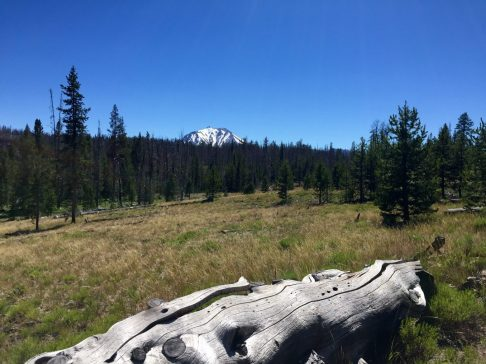 Lassen Peak jutting up from a forest into a cloudless sky