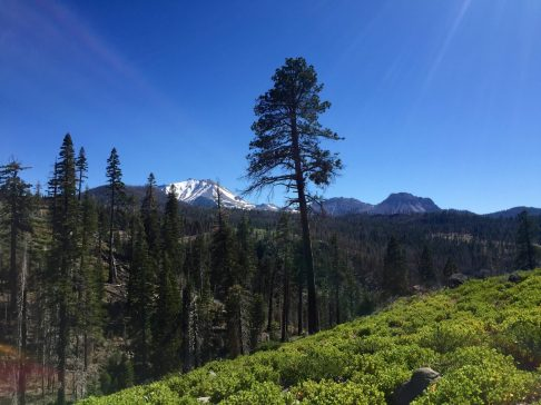 Lassen Peak and lone tree